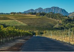 A road going through the Cape Winelands