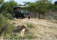 ongava lodge game drive