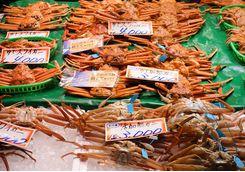 Omicho market crabs in Kanazawa