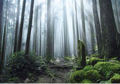 Kumano Kodo trail and shrine
