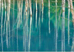 Close up of cobalt blue Biei Lake