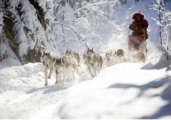 aurora safari camp dog sledging