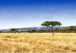 tanzania plains