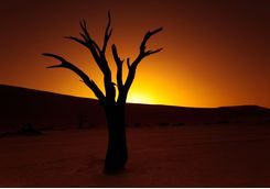 The NamibRand desert and tree at sunset