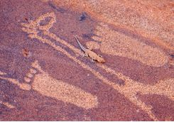 Footprint engravings and a lizard