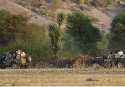 Rawla Narlai leopard safari