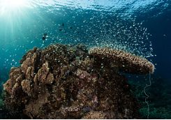 An underwater photo of a coral reef in Komodo