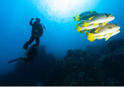A scuba diver in Komodo with fish