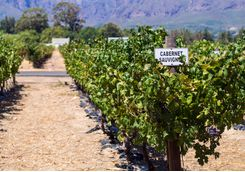 cab sav sign