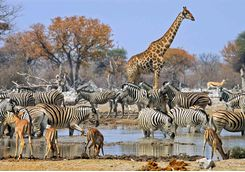 animals at the watering hole