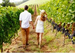 Vineyards walking