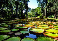Botanical Gardens Mauritius