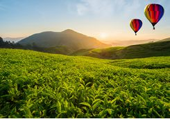Balloons flying over the tea hills in Sri Lanka