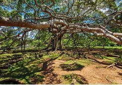 Botanical Gardens in Kandy