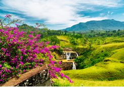 Waterfalls in the tea hills