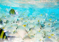 Fish in the southern Sri Lankan Ocean