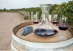 Decanter of red wine in a vineyard