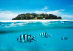 Fish underwater in Zanzibar