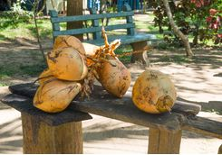 tangalle coconuts