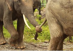 elephant_sanctuary