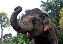 playful_elephant
