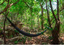 rainforest_hammock
