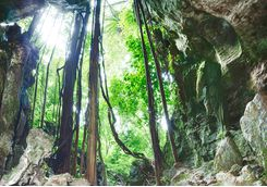 rainforest_caves