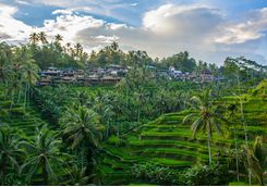 ubud_rice_paddies_village
