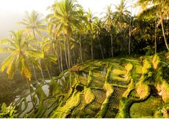 ubud_sunset_paddies