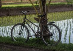 bali_bike