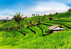 bali_rice_paddies