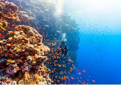 diving_edge_of_reef