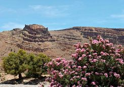 Flowers and mountain in southern Morocco