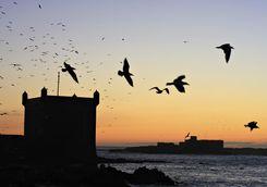 Sunrise in Essaouira