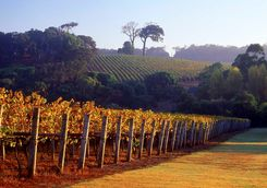 Vineyards at the Margaret River
