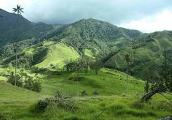 Lush hills of the coffee region