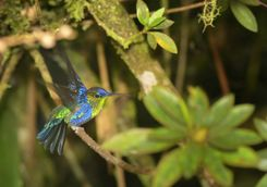 Hummingbird in the trees