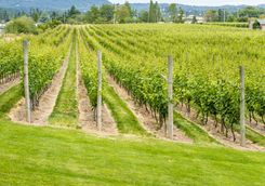 Victoria vineyard in Canada
