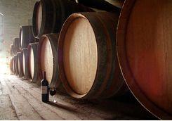 wine barrels and wine