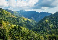 Jamaican coffee hills