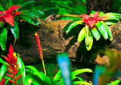 Rainforest flowers