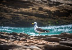 Seagull on rocks
