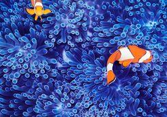 Vibrant Clown Fish Reef