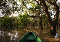Kayak in the Rainforest