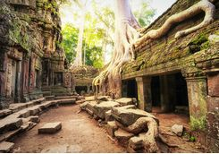 A tree's roots growing over a temple