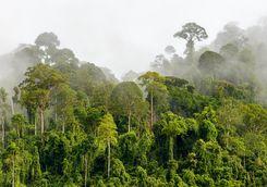 The Sepilok Rainforest