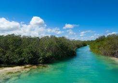 sian ka'an mangroves