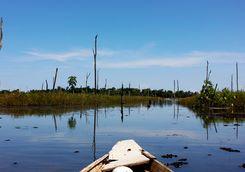 Canoe in the Wetlands