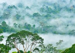 Fog over the Danum Valley