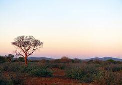Sunrise in Madikwe